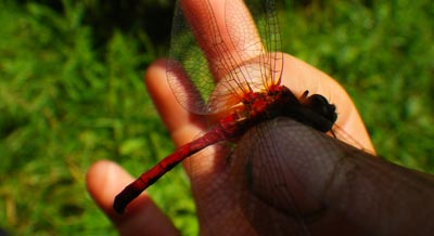 Camper holding a dragonfly