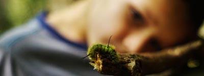 Child watching a caterpillar
