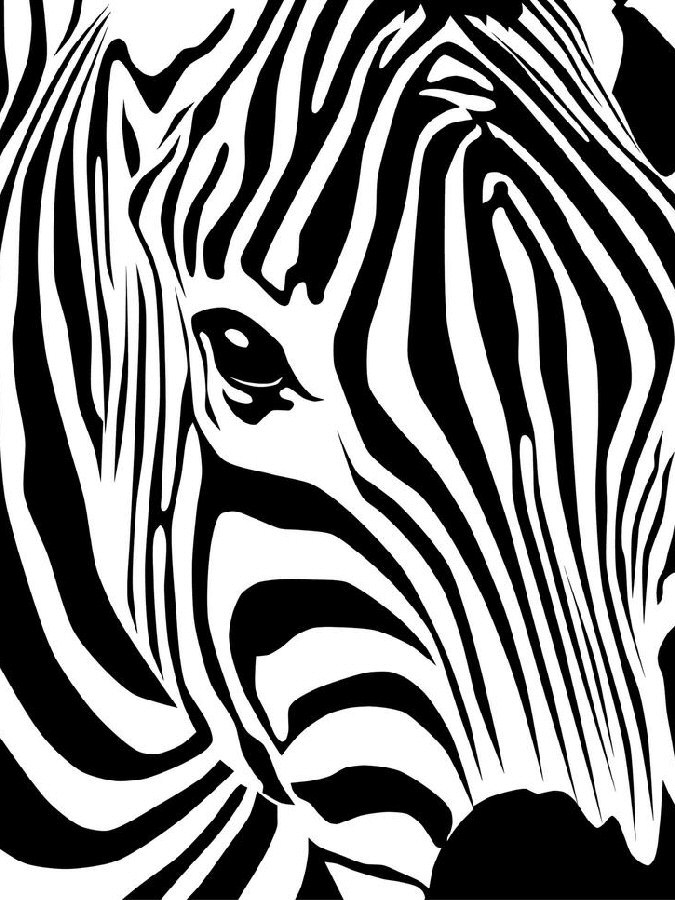The Santé Group, Inc. Zebra imagery