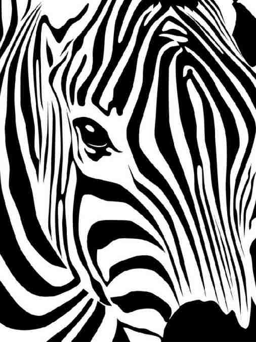 The Santé Group, Inc. Zebra image