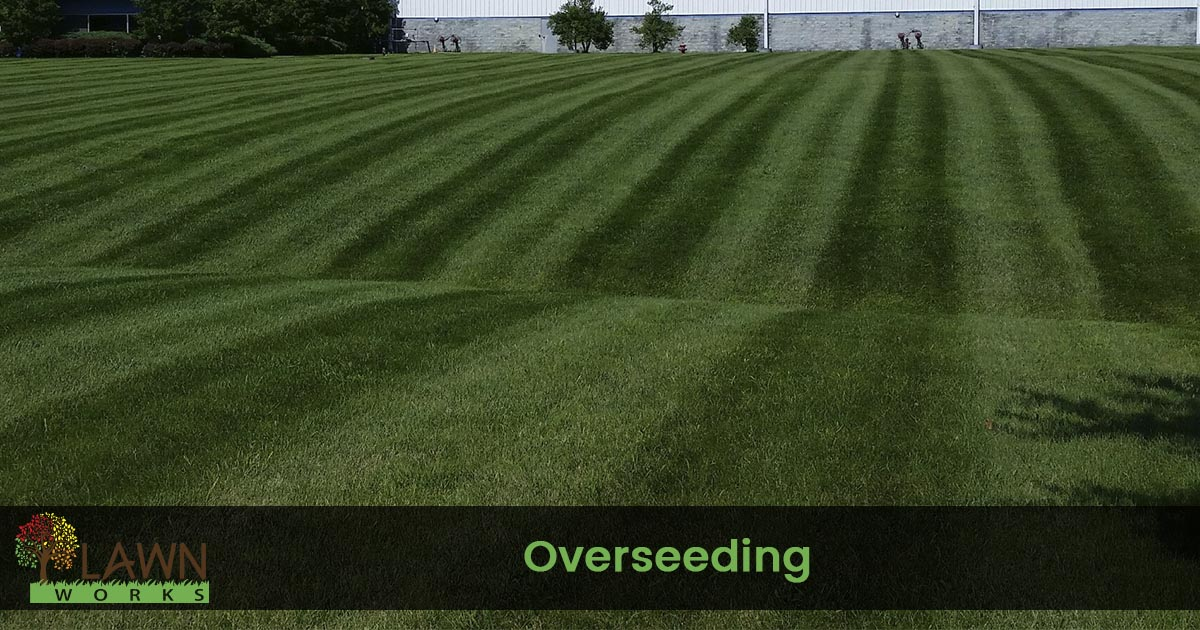lawn over seeding