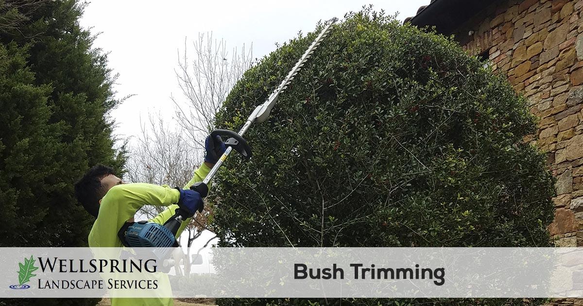bush trimming service