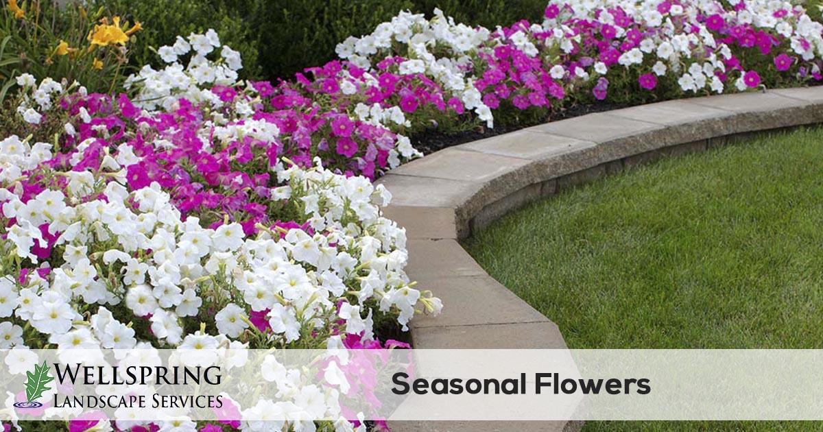 Seasonal Flower Installation Wellspring Landscape Services