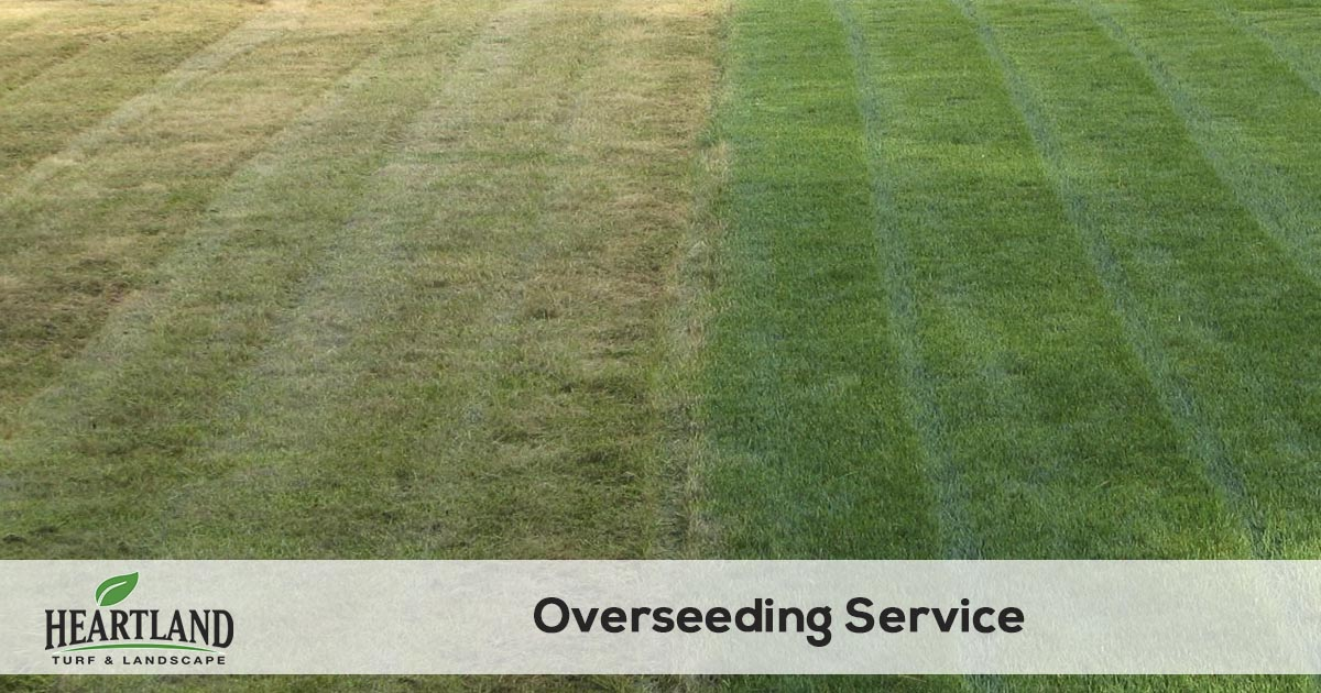 grass seeding service