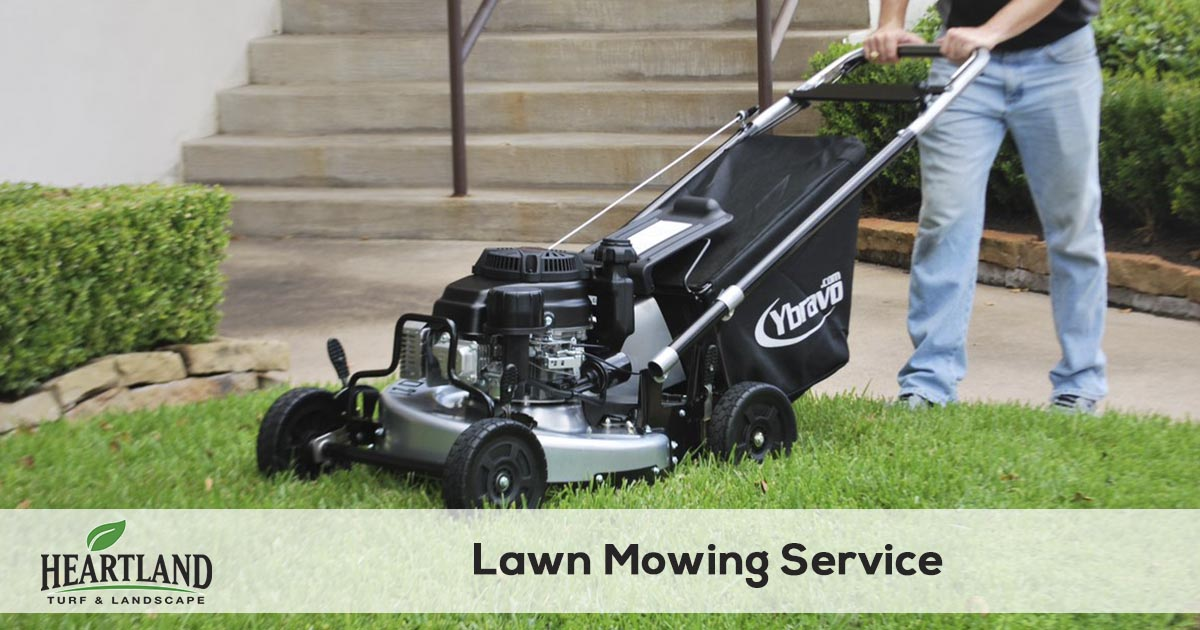 lawn mowing and grass cutting service