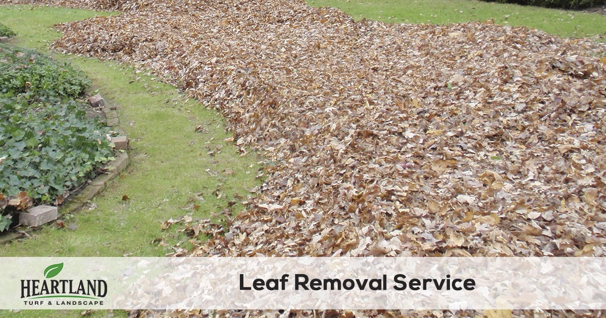 leaf clean up and removal service
