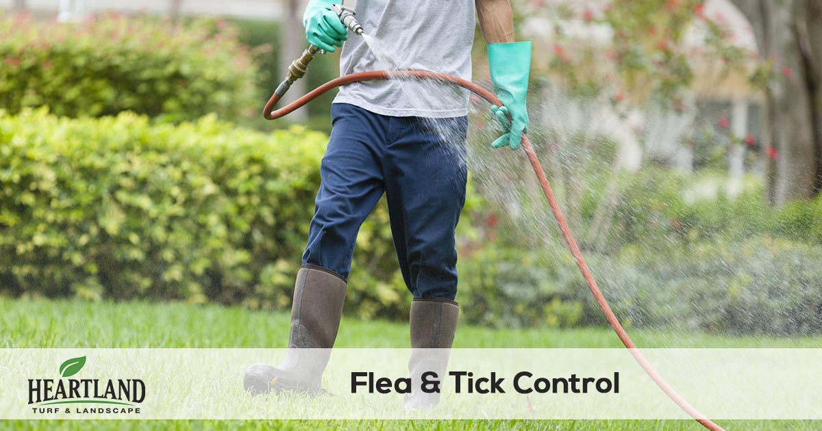 flea and tick spraying service