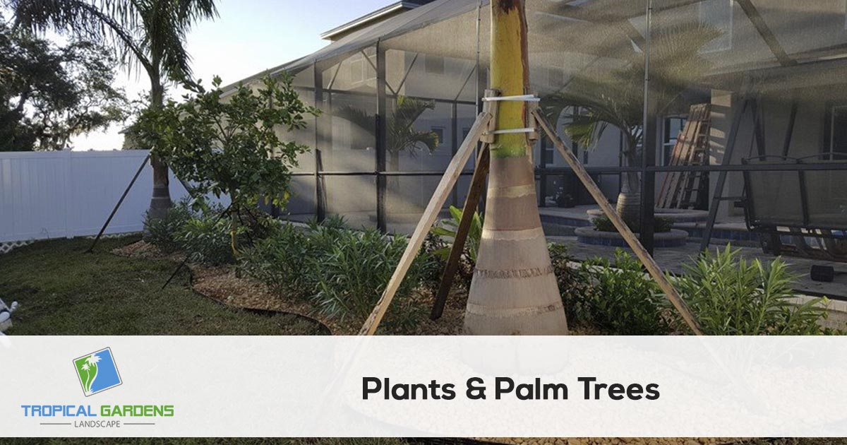 palm tree planting and trimming in sarasota florida
