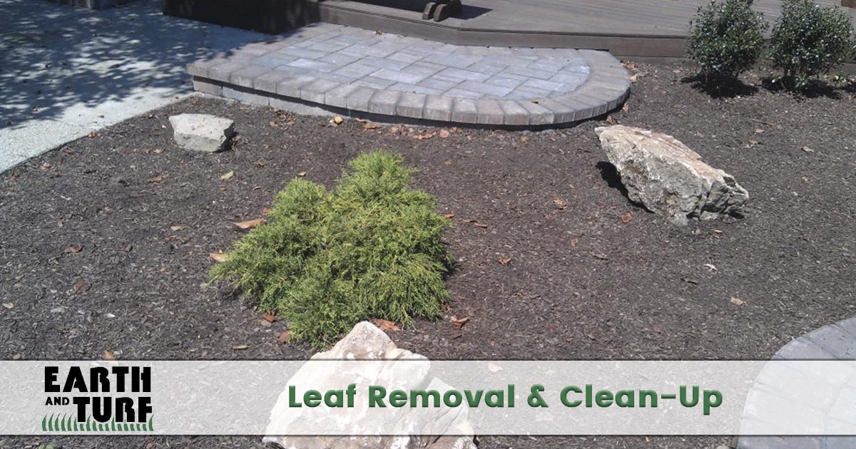 leaf removal and clean up