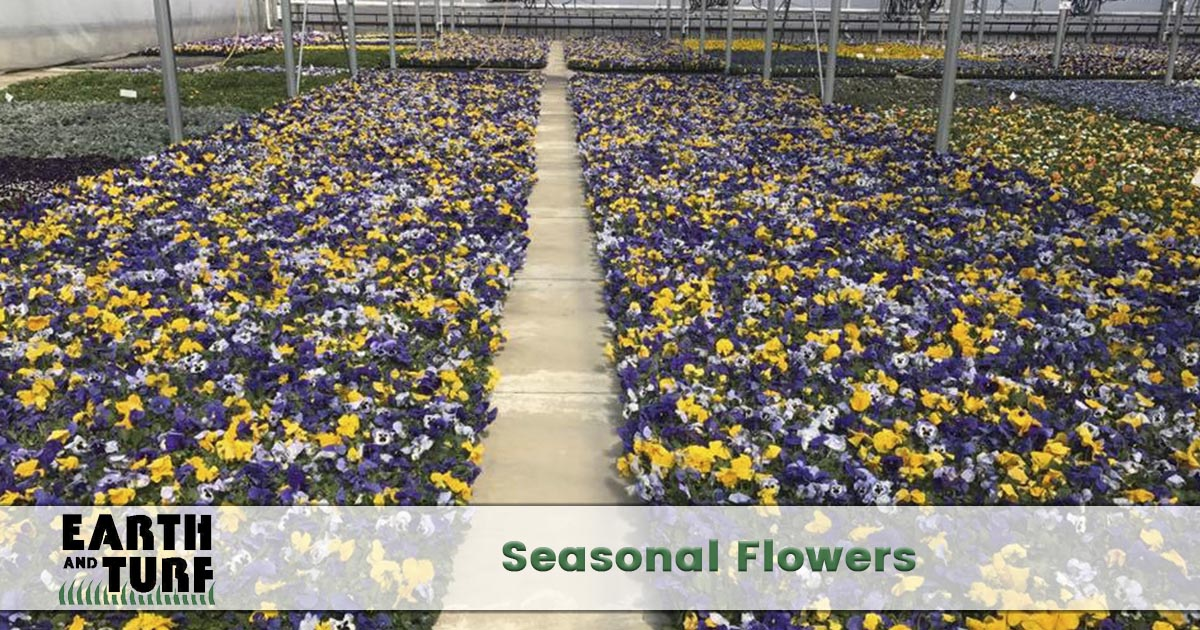 seasonal flower planting service