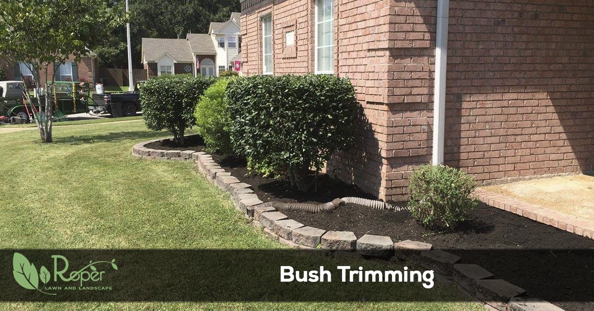 bush trimming and landscape maintenance
