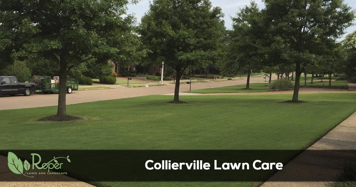 Collierville Lawn Care & Landscaping Service