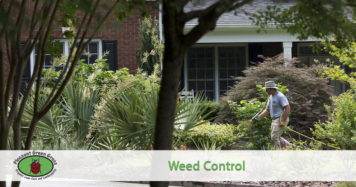 Weed spraying