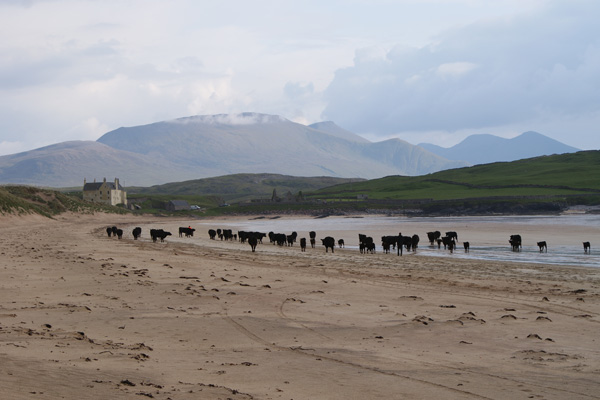 Elliot Houses - Balnakeil House Beach