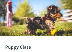 Puppy Class Image