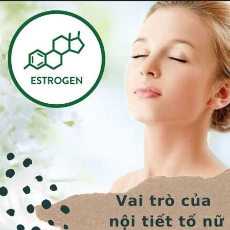 estrogen có vai trò gì