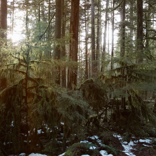 A Quick Stop in at Cathedral Grove