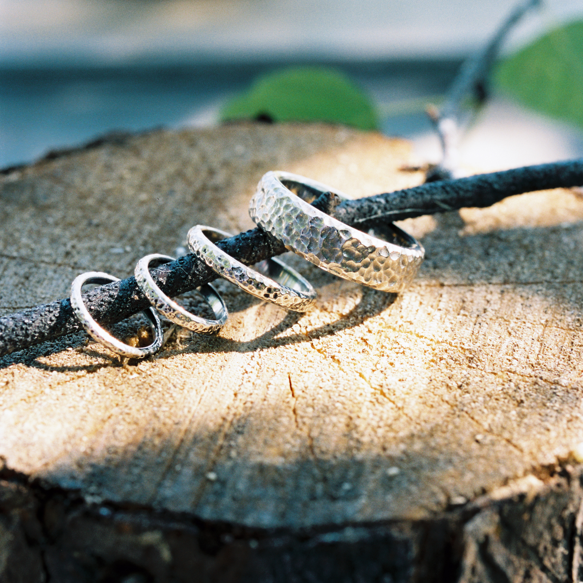 Close-up of rings on a wood branch