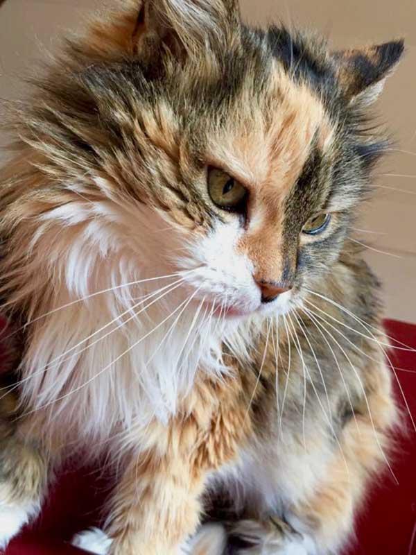 Suites des Communications Animales - Préparation à l'intervention et à la convalescence - Suivre sa Joie - Saskia Parein