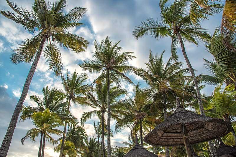L'îles Maurice- Le duo de choc ! L'île Maurice et l'île de la Réunion - Suivre sa Joie - Saskia Parein