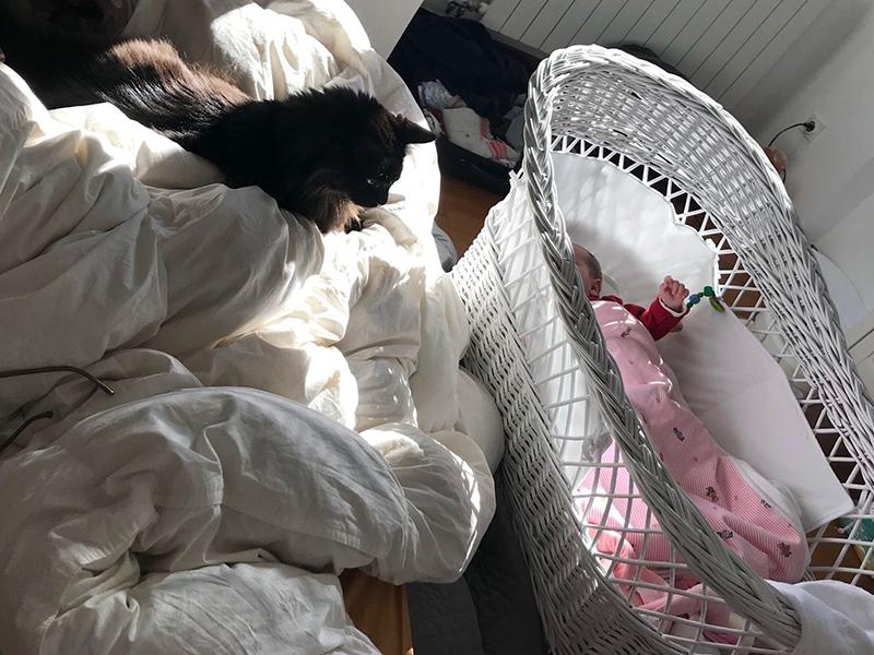 Suites des Communications Animales - Un nouveau-né dans la famille- Suivre sa Joie - Saskia Parein