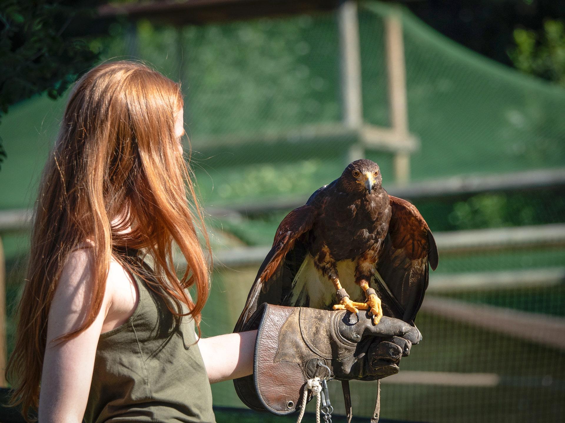 Blog Lifestyle - Apprentis Fauconniers 4 - Saskia Parein