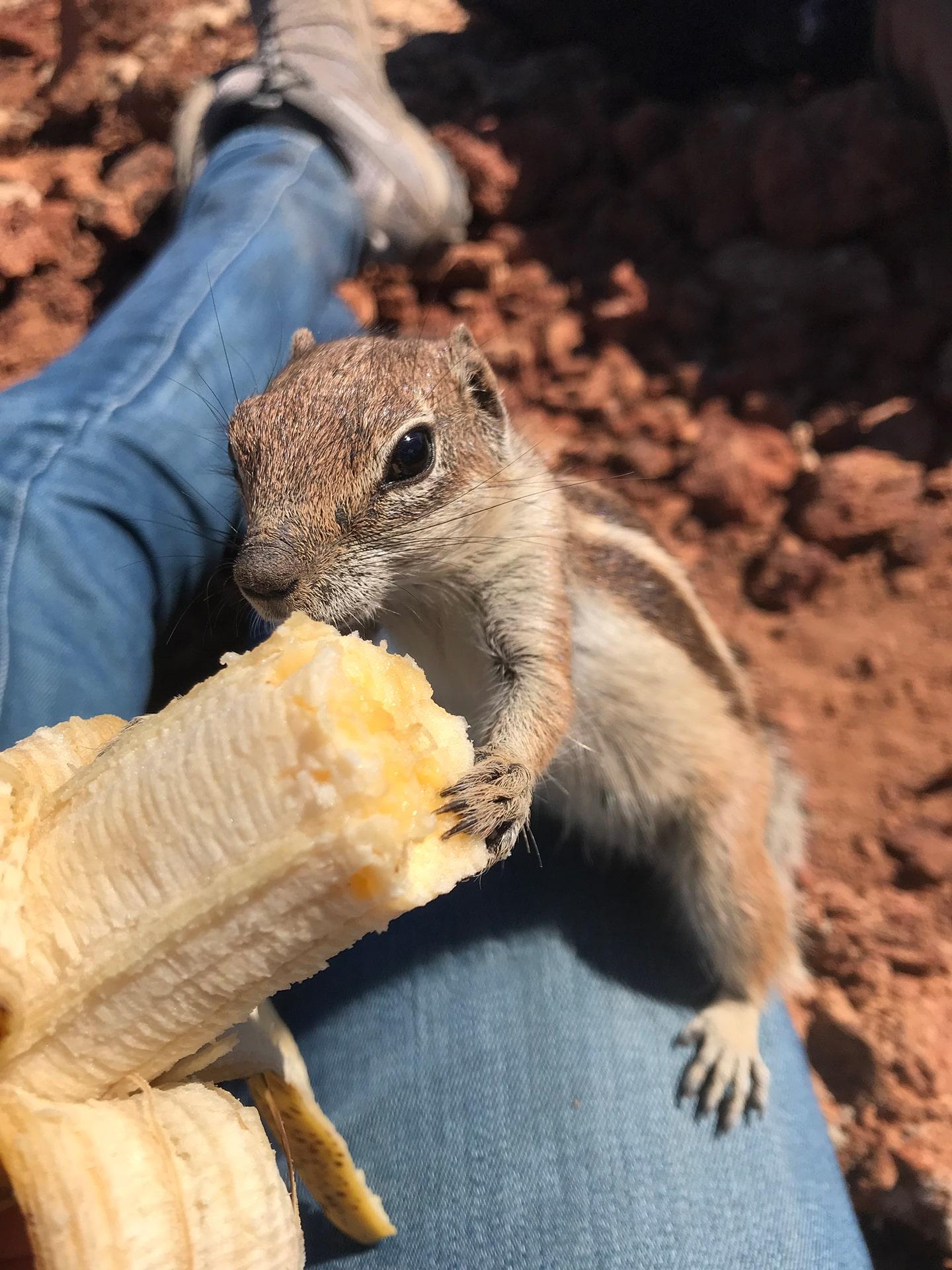 Blog Lifestyle - L'écureuil mange ma banane - Suivre sa Joie - Saskia Parein