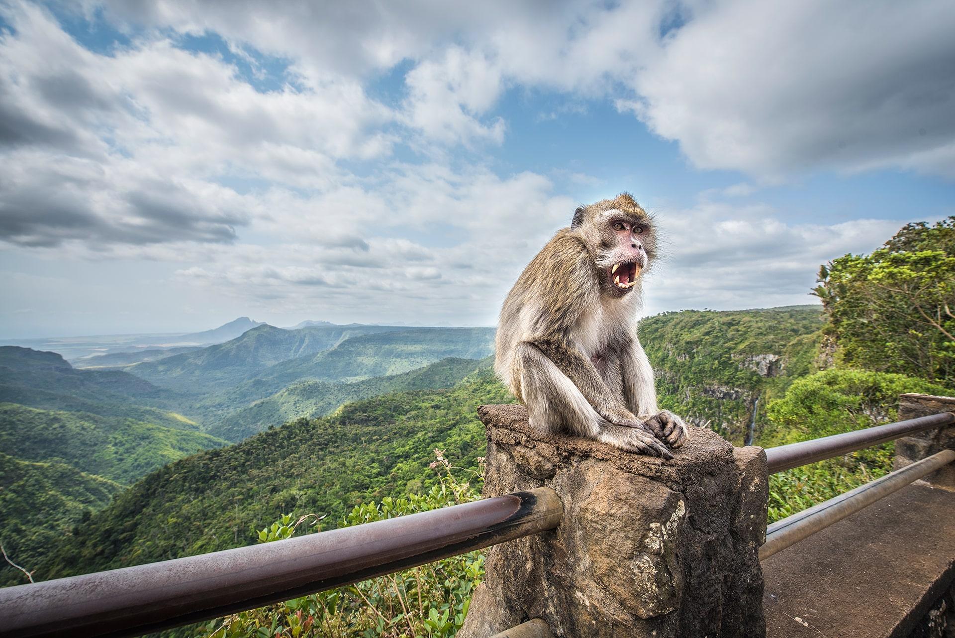 Un Singe du Parc National des Gorges de la Rivière Noire- Le duo de choc ! L'île Maurice et l'île de la Réunion - Suivre sa Joie - Saskia Parein