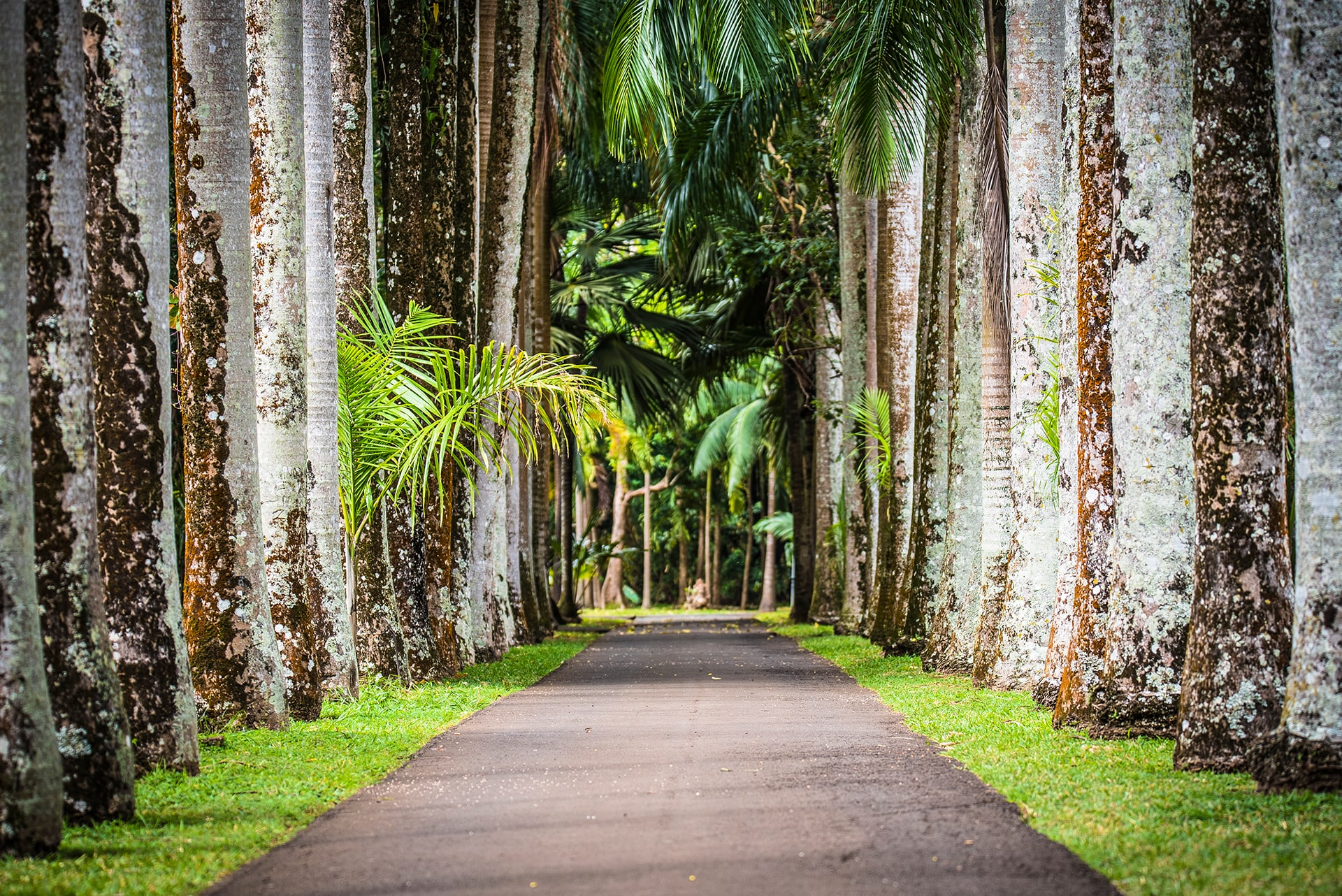 A travers le jardin botanique de Pamplemousse- Le duo de choc ! L'île Maurice et l'île de la Réunion - Suivre sa Joie - Saskia Parein