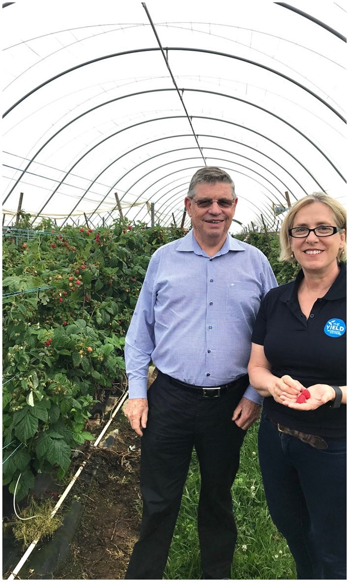 Harry Debney, CEO of Costa Group, & Ros Harvey, Founder & Managing Director of The Yield, at a Costa berry farm in NSW.