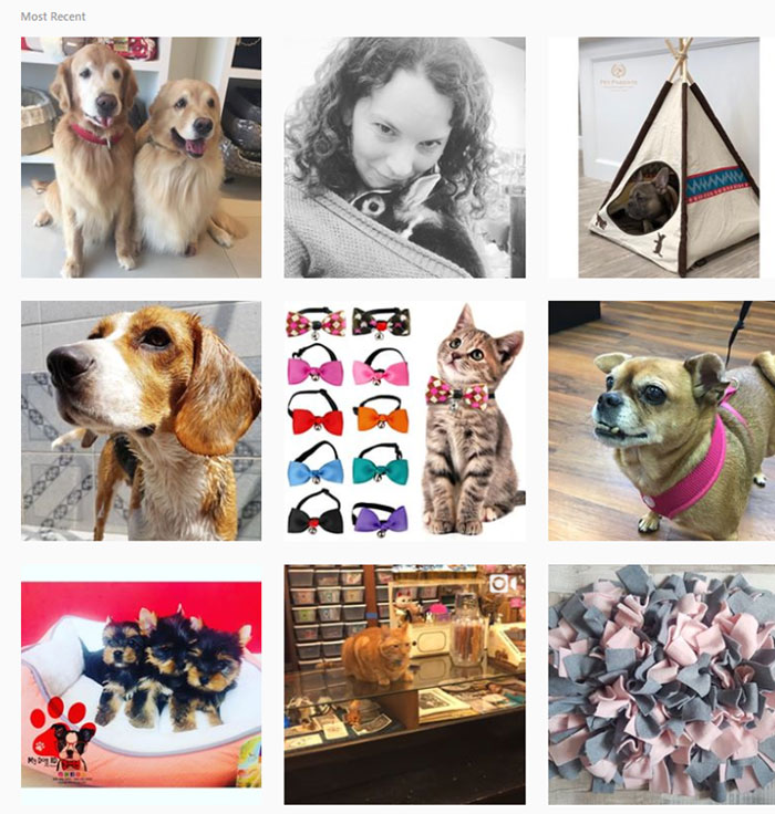 Instagram Most Recent Posts For #petstore