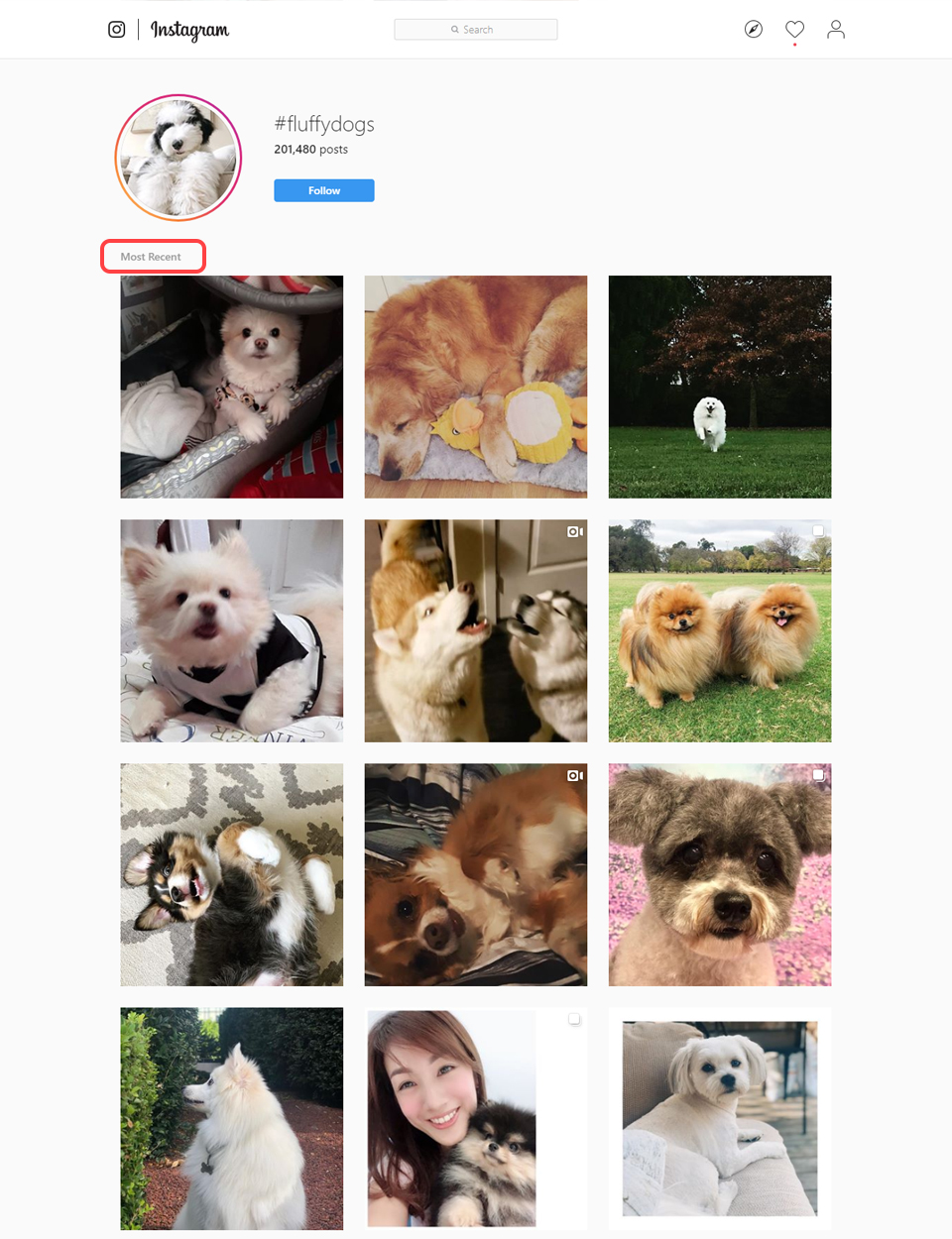 Fluffydogs most recent posts show pictures and videos of users posting with that hashtag
