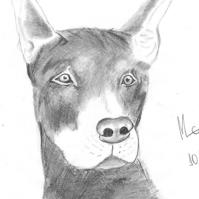 Dog Drarwing