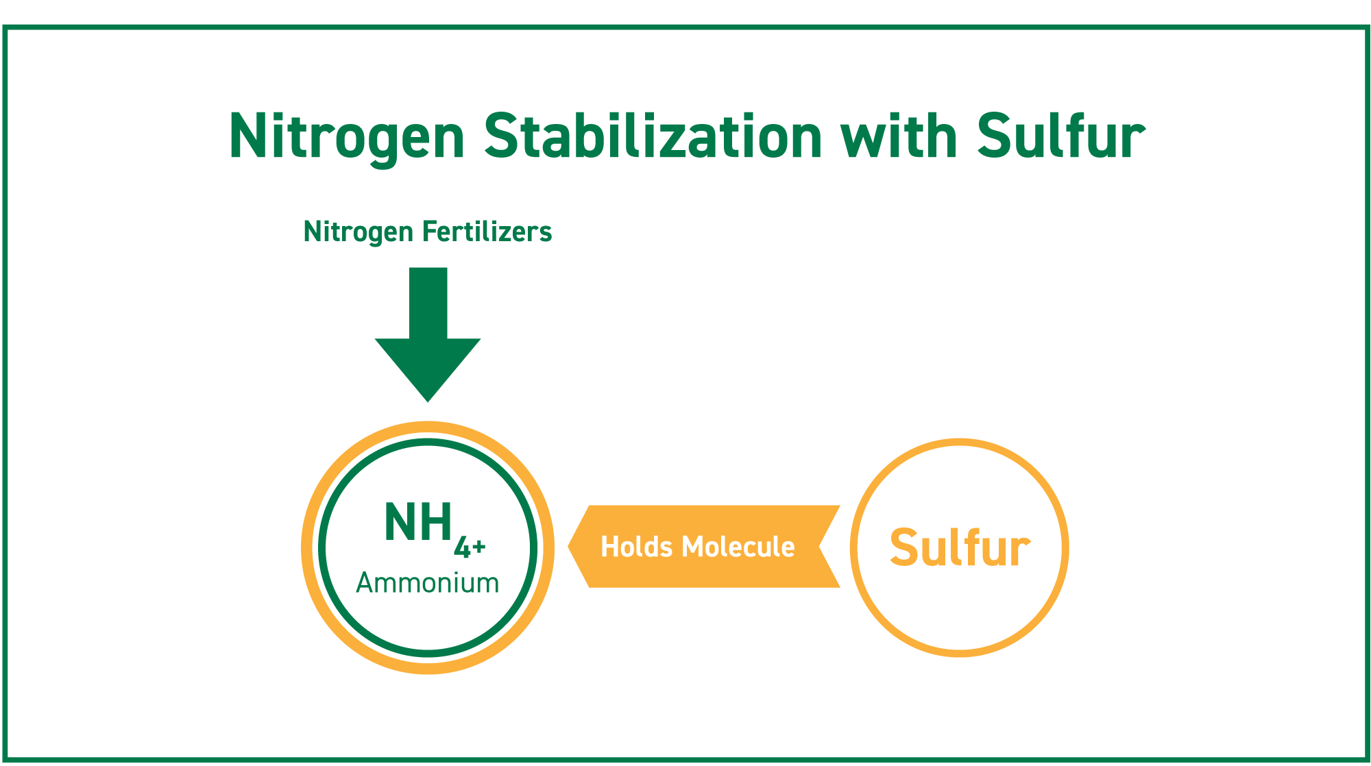 sulfur helps hold the ammonium nitrate molecule in the soil to improve nitrogen's stability