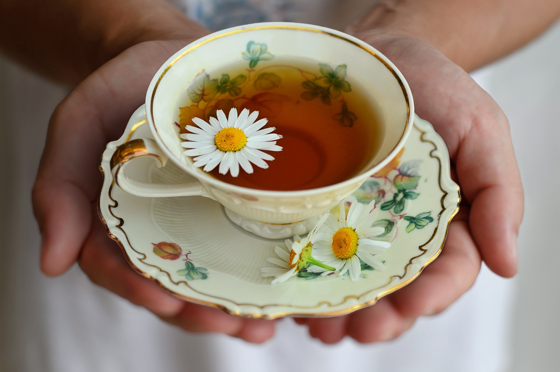 How to make chamomile tea 5 recipes from simple tea to a hot toddy chamomile tea is one of the most recognizable teas on the planet its renowned for its calming nature and beloved as a bedtime tea izmirmasajfo