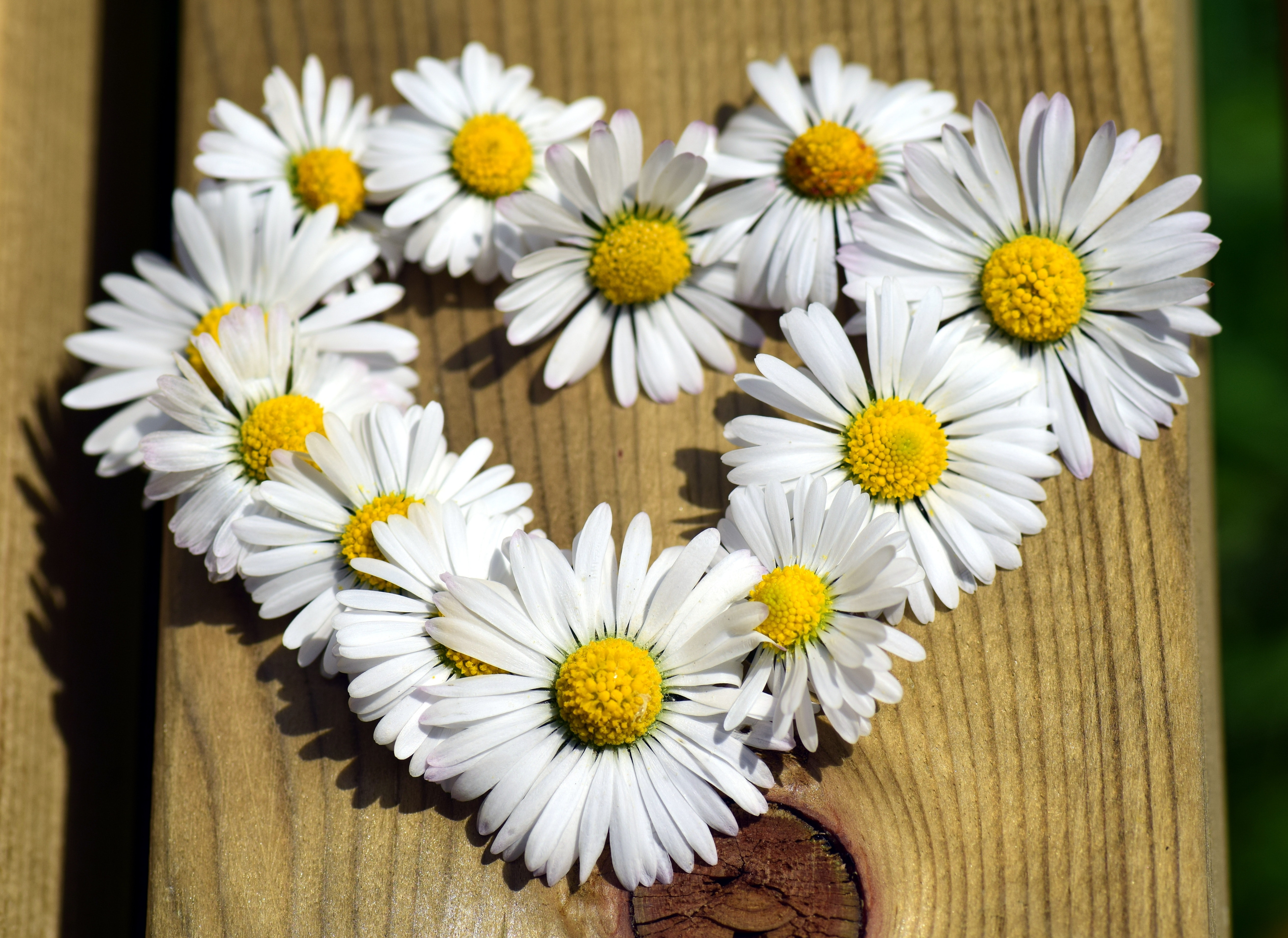 The most unusual ways to use chamomile 18