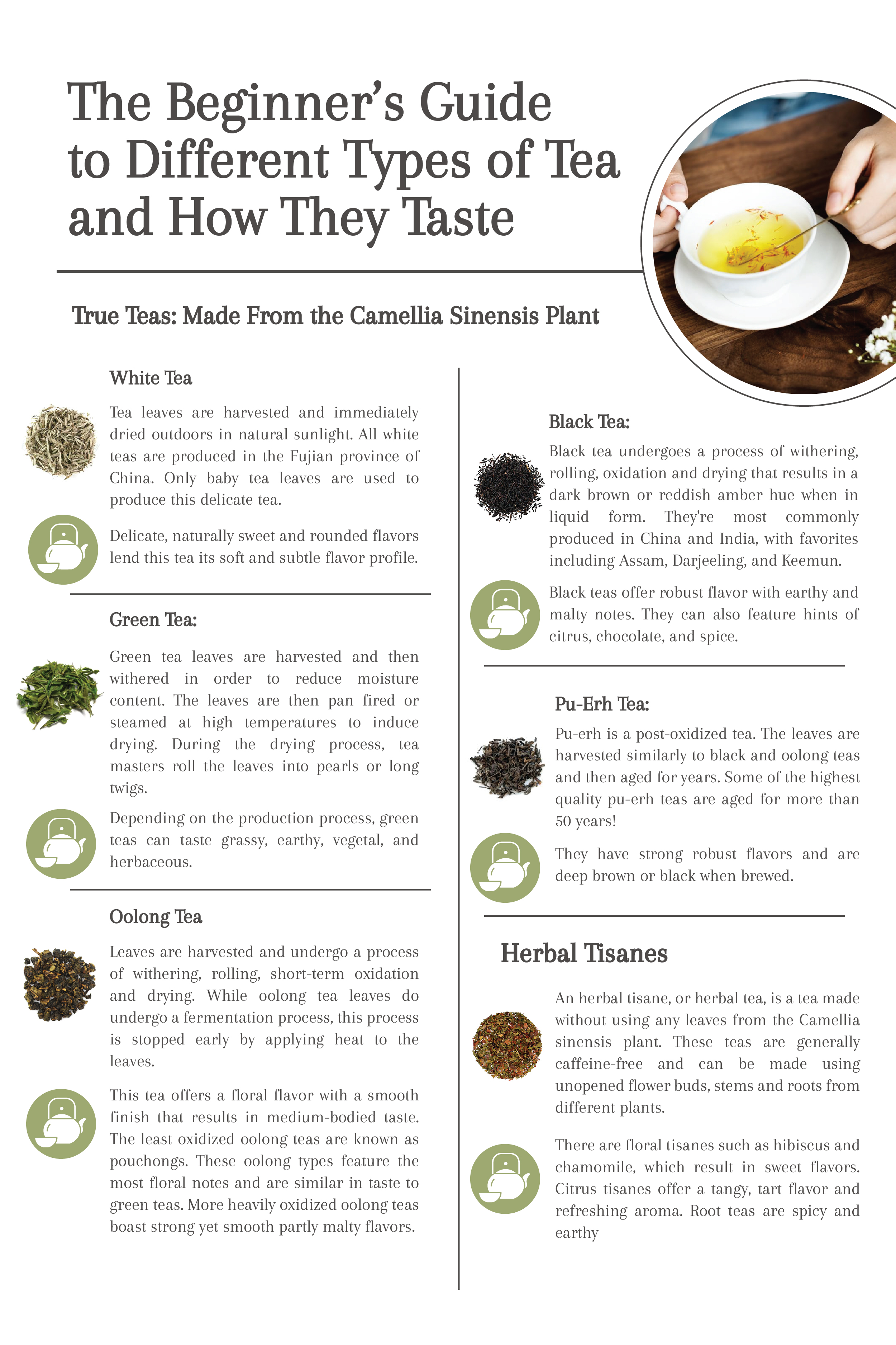 The Beginner S Guide To Different Types Of Tea And How They Taste