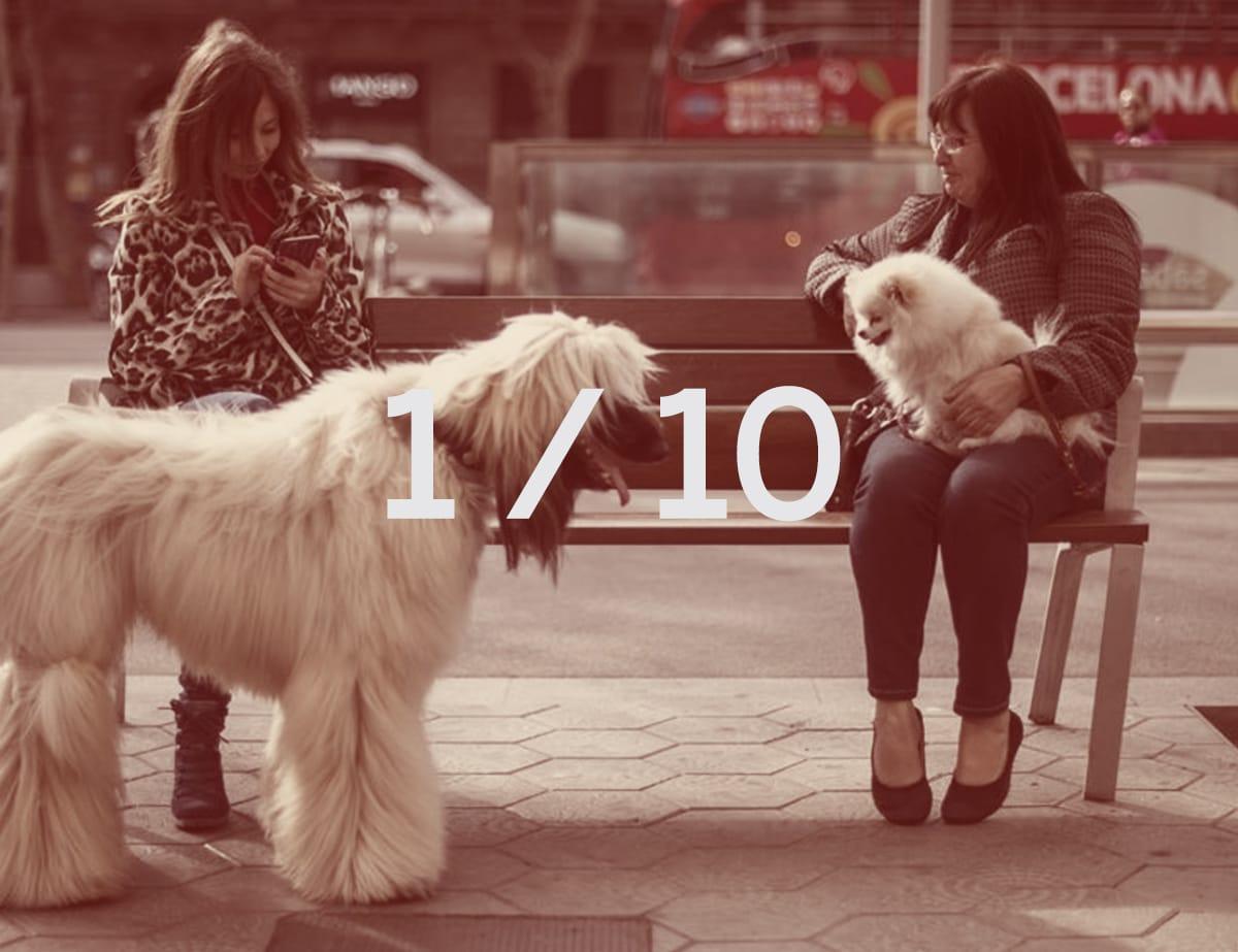 dos mujeres con sus perros