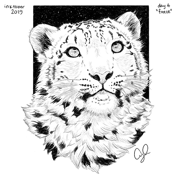 Black and white ink drawing of a snow leopard's face.