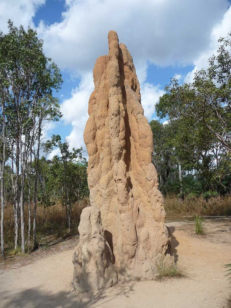 Termite inspections find termites' in-ground homes