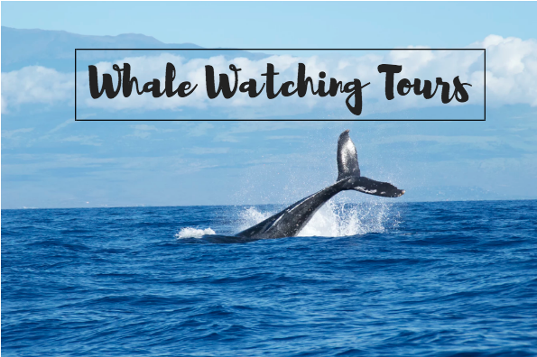 morro bay whale watching tours