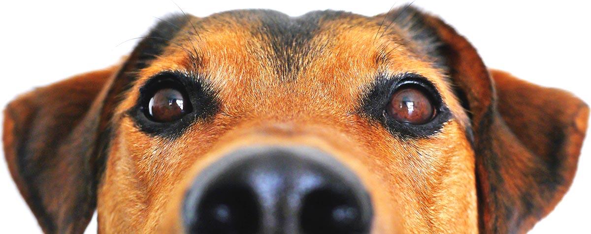 Arche 4 Dogs