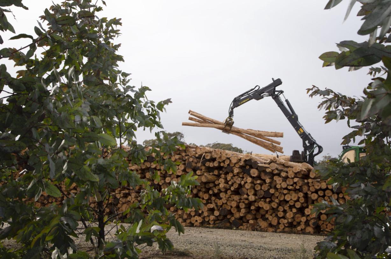SFM talks to Tasmanian Timber