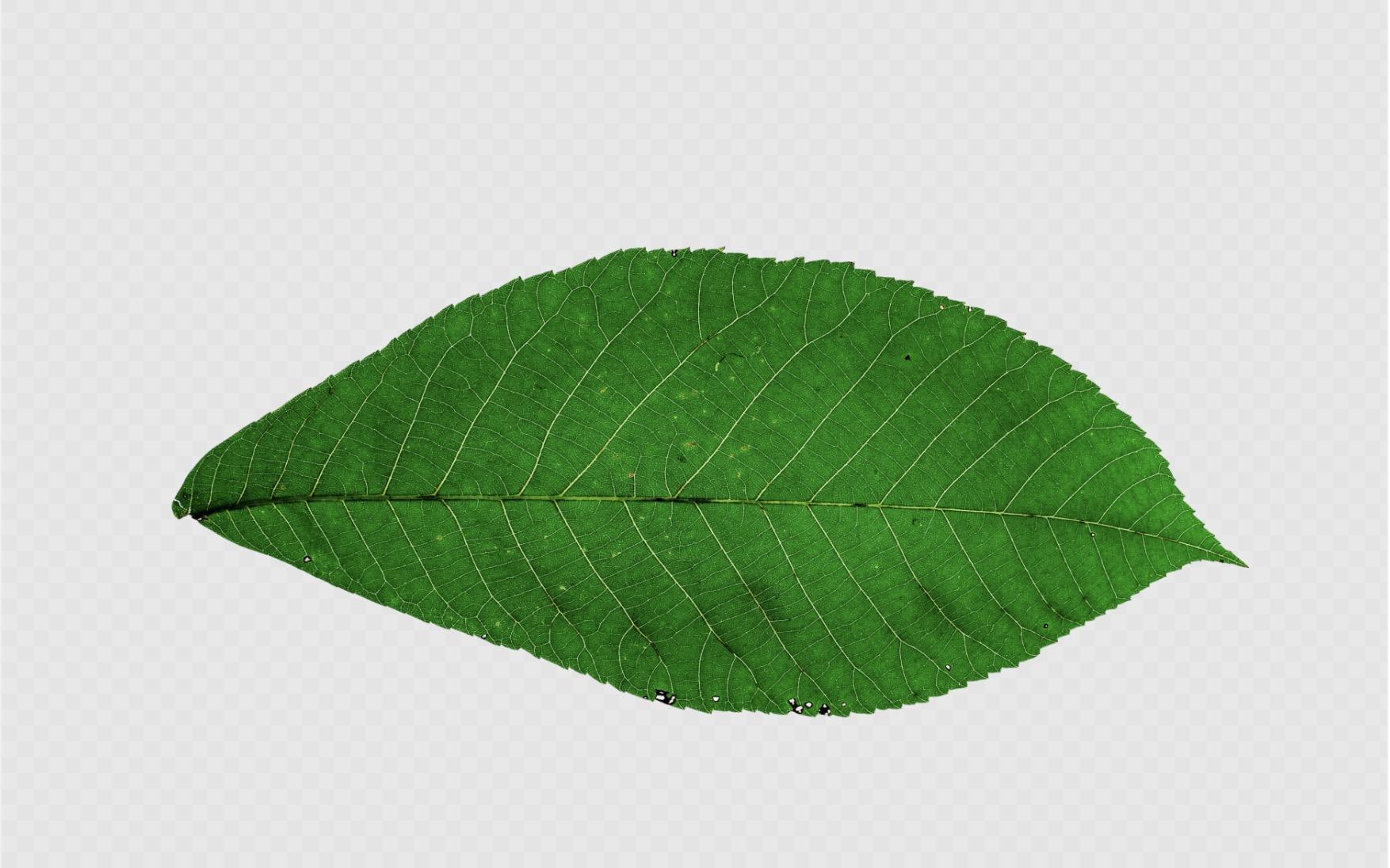 Transparent Fall Leaf Clipart No Background - Fall Leaves Png Transparent,  Png Download - kindpng