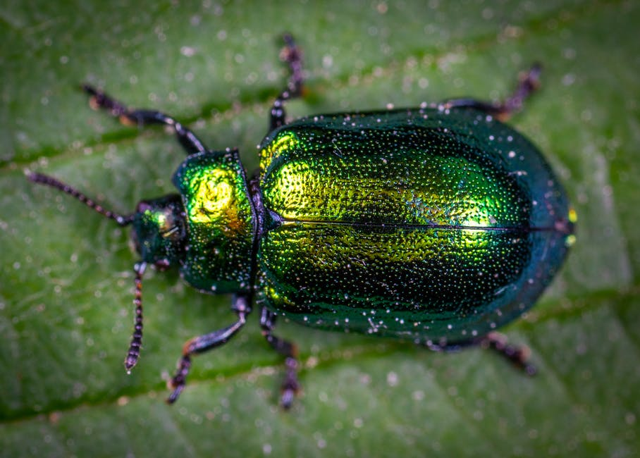 Macro Photography of Jewel Beetle on Green Leaf