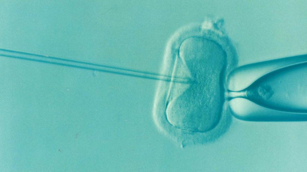 a cell undergoing fertilization under a microscope