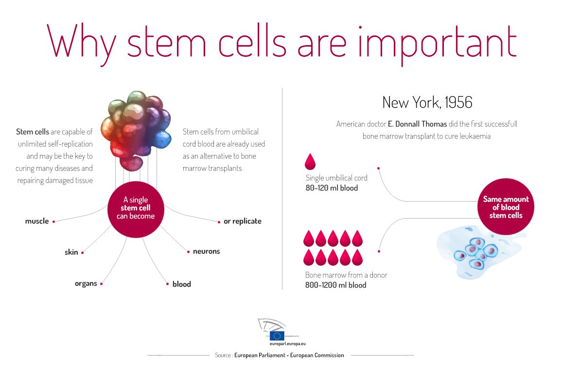Two-panel diagram entitled Why stem cells are important