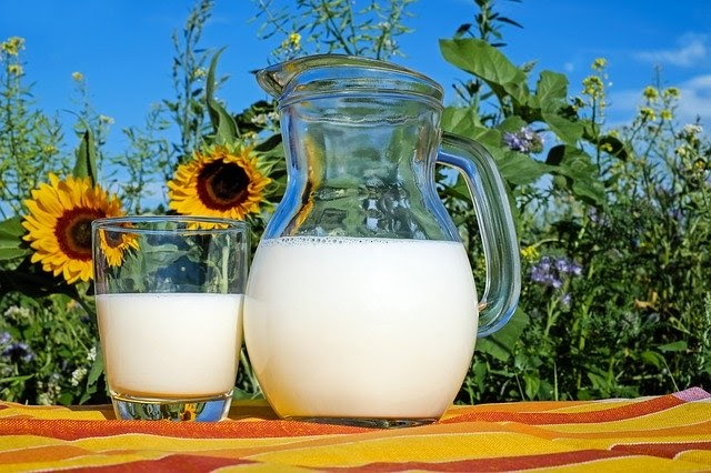 Milk in a glass pitcher and cup on a backdrop of sunflowers