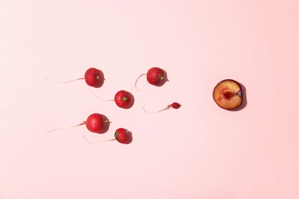 Radishes positioned toward a half a plum in a visual representation of the sperms' journey to the egg