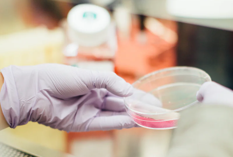 An image of gloved hands holding a petri dish with liquid and a sponge in it.